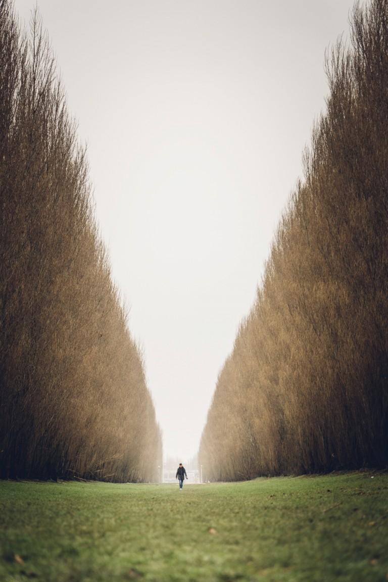 Tree Passage, Leidsche Rijn
